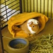 Wilbur Pig