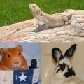 Exotic Animal Rescue and Pet Sanctuary (EARPS, Inc.)
