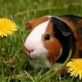 Dandelion Lodge small animal boarding and pet sitting services