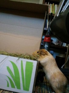 Small Pet Select - High quality timothy hay for guinea pigs